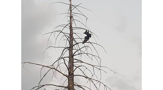 Ağaçta asılı kalan kargayı itfaiye kurtardı