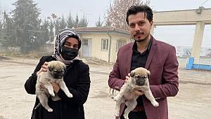 AK Parti Yeşilyurt Gençlik ve Kadın Kolları Sokak Hayvanlarını Unutmadi
